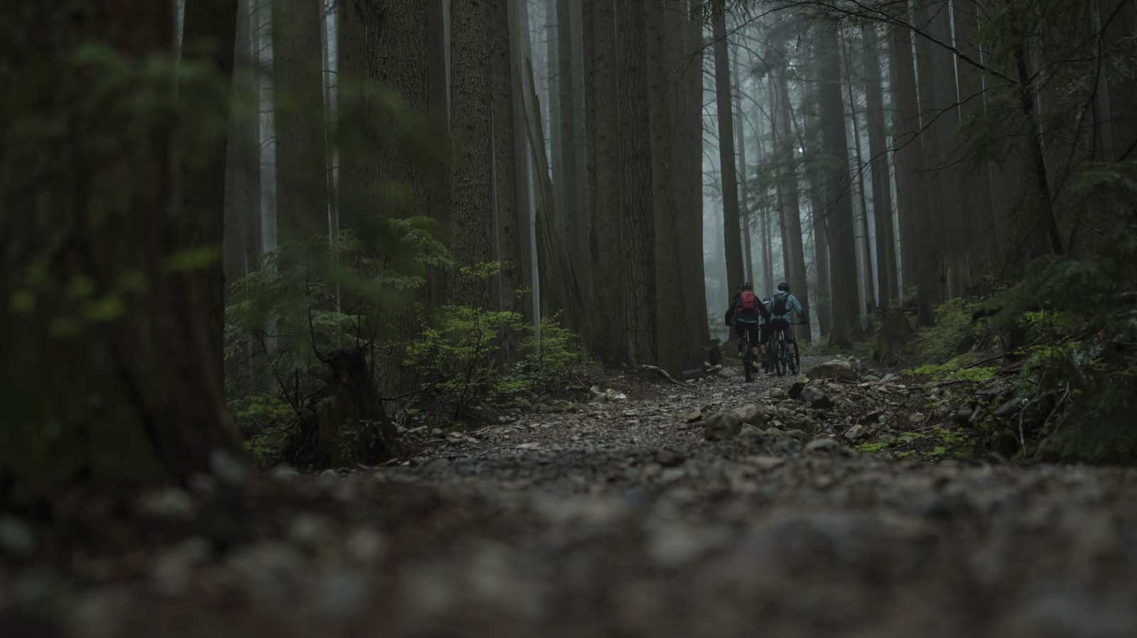 Bikes in a rainy forest